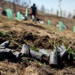 Reforestación para un mejor planeta